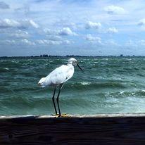 Meer, Tiere, Vogel, Landschaft