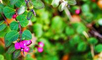 Beere, Blätter, Zweig, Fotografie