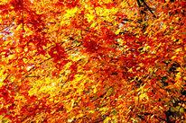 Zweig, Blätter, Herbst, Fotografie