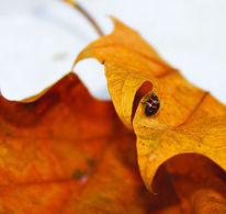 Käfer, Blätter, Fotografie