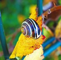 Blätter, Herbst, Schnecke, Fotografie