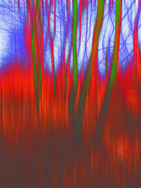 Fotografie, Rot, Baum, Woods