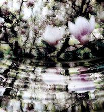 Unschärfe, Hecke, Fotografie, Natur