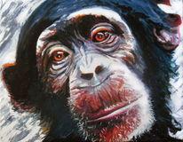 Portrait, Ausdruck, Schimpanse, Augen