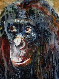 Schimpanse, Blick, Portrait, Affe