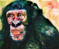 Portrait, Affe, Schimpanse, Primat