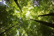 Natur, Grün, Landschaft, Baum