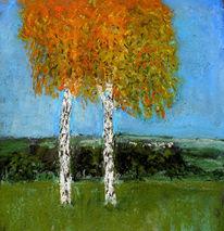 Birken, Farben, Licht, Landschaft
