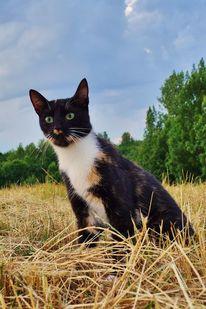Katze, Landschaft, Blick, Fotografie