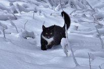 Katze, Schnee, Aktion, Fotografie