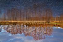 Eis, Baum, Himmel, Spiegelung