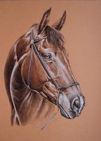 Tierportrait, Pferde, Pferdeportrait, Malerei