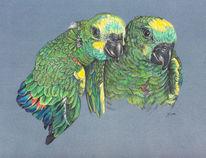 Vogel, Grün, Papagei, Federvieh