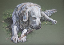 Tierportrait, Labrador, Retriever, Hund