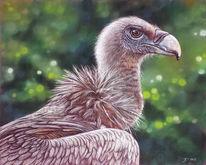 Vogel, Pastellmalerei, Gänsegeier, Geier