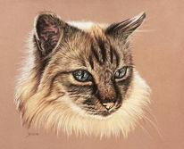 Katze, Siamkatze, Malerei