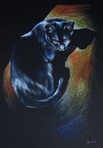 Katze, Schatten, Buntstiftzeichnung, Black cat