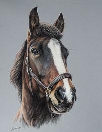 Pastellmalerei, Pferde, Tierportrait, Zeichnungen