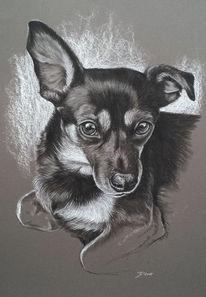 Tiere, Hund, Tierportrait, Zeichnungen