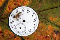 Insekten, Mücke, Herbst, Vergehen