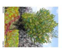 Natur, Baum, Baumreihe, Bunt