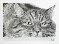 Zeichnung, Bleistiftzeichnung, Grafit, Katzenzeichnung