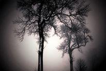 Wolken, Nebel, Zweig, Schnee