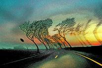 Himmel, Verkehrsschild, Sonnenaufgang, Äste