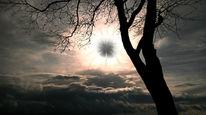 Himmel, Äste, Licht, Zweig
