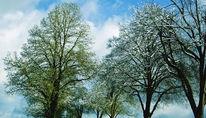 Pflanzen, Baum, Himmel, Äste
