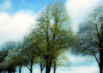 Pflanzen, Baum, Wolken, Stamm