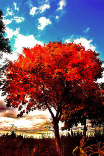 Feld, Wolken, Blätter, Himmel