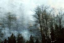 Geschwindigkeit, Äste, Wind, Licht