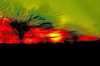 Sonne, Fahrt, Baum, Licht