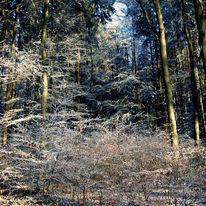 Busch, Schnee, Wald, Äste