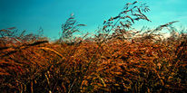 Pflanzen, Himmel, Sonne, Luft