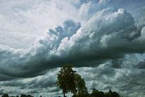 Pflanzen, Wolken, Licht, Himmel