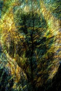 Licht, Hitze, Baum, Gesicht