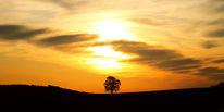 Baum, Feld, Himmel, Weite