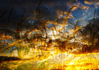 Feld, Pflanzen, Wolken, Horizont