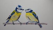 Blaumeisen, Vogel, Aquarellmalerei, Aquarell