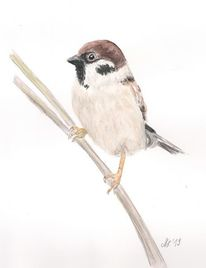 Feldsperling, Aquarellillustration, Sperling, Tiere