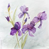Schwertlilie, Iris, Aquarellmalerei, Blau