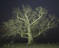 Hürbel am rangen, Nacht, Nachtaufnahme, Monumentale bäume