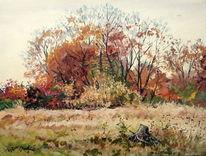 Herbst, November, Blätter, Wiese