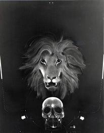 Löwe, Schädel, Mort, Malerei