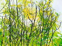 Natur, Wald, Frühling, Licht