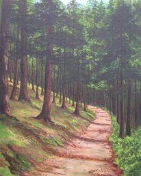 Wald, Weg, Sommer, Tanne