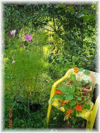 Sommer, Regenbogen, Fotografie, Mecklenburg