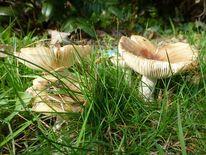 Pilze, Grün, Beige, Landschaft